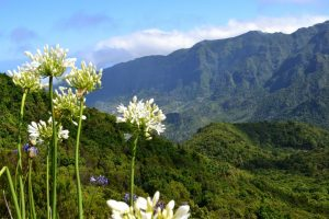Madeira -foresta-di-laurisilva